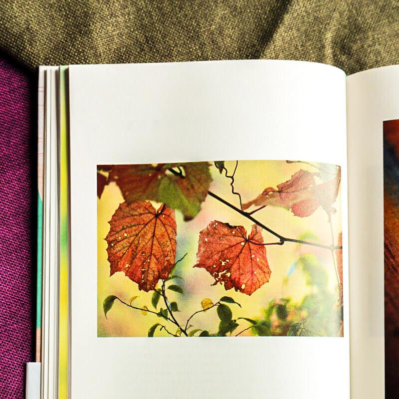每周一书:志村福美、井上隆雄《奏响色彩》